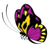 Bella farfalla per un disegno Fotografia Stock Libera da Diritti