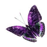 Bella farfalla porpora e verde di volo isolata sulle sedere bianche Fotografia Stock Libera da Diritti