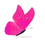 Bella farfalla rosa immagini stock