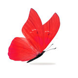 Bella farfalla rossa immagine stock