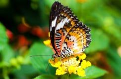 Bella farfalla su un fiore Fotografia Stock Libera da Diritti