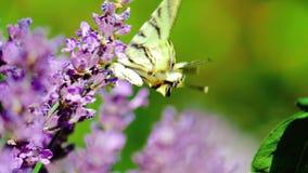 Bella farfalla su un fiore vista di estate dell'erba del campo di angolo largamente Colpo del movimento lento archivi video