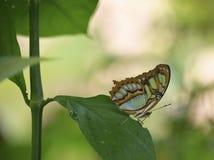 Bella farfalla su un foglio Fotografie Stock