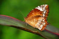 Bella farfalla in una pianta Fotografie Stock Libere da Diritti