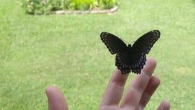 Bella, farfalla unicamente colorata immagini stock