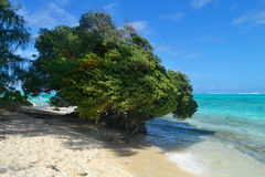 Bella festa sull'isola di Saipan La bella isola di Saipan Fotografia Stock Libera da Diritti