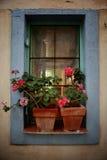Bella finestra con i fiori fotografie stock libere da diritti