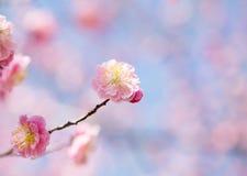 Bella fioritura dei fiori in primavera Immagini Stock