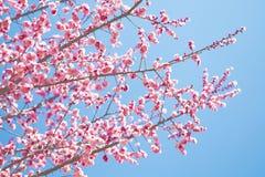 Bella fioritura dei fiori in primavera Immagine Stock