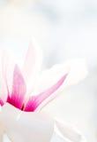 Bella fioritura dei fiori in primavera Fotografia Stock