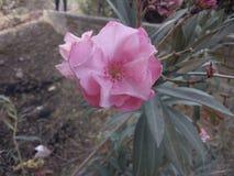 Bella fioritura del fiore immagine stock