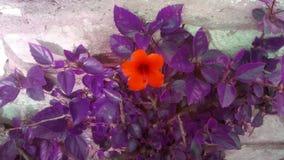 Bella flora fotografie stock