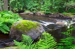 Bella flora del fiume svedese Fotografia Stock Libera da Diritti