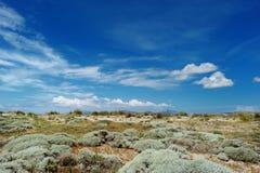 Bella flora dell'isola di Kos Fotografia Stock