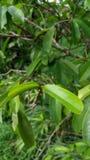 Bella foglia verde in albero Immagine Stock