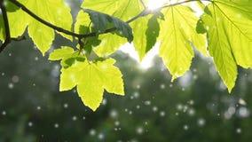 Bella foglia verde sul ramo di un albero con il sole archivi video