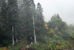Bella foresta Fotografie Stock Libere da Diritti