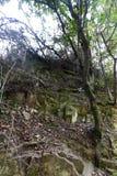 Bella foresta Immagini Stock Libere da Diritti