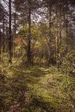 Bella foresta Immagini Stock