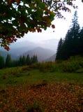 Bella foresta Fotografia Stock Libera da Diritti