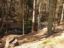 Bella foresta Immagine Stock Libera da Diritti