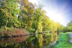 Bella foresta ad alba fotografia stock
