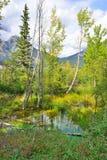 Bella foresta alpina che riflette in un lago alpino lungo la strada panoramica di Icefields fra Banff ed il diaspro durante i wi  Immagini Stock Libere da Diritti