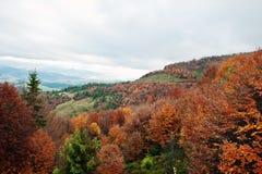Bella foresta arancio, verde e rossa di autunno della foresta di autunno, mA Fotografia Stock Libera da Diritti