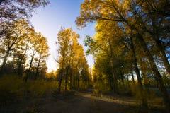 Bella foresta in autunno immagine stock