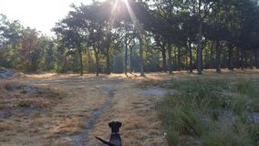 Bella foresta con splendere del sole e un cane avventuroso fotografia stock