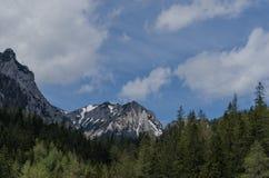 bella foresta dell'alta montagna Immagini Stock Libere da Diritti