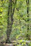 Bella foresta densa Fotografie Stock Libere da Diritti