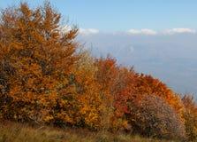 Bella foresta di autunno Immagini Stock Libere da Diritti