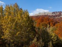 Bella foresta di autunno Immagini Stock