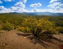 Bella foresta di autunno Fotografie Stock