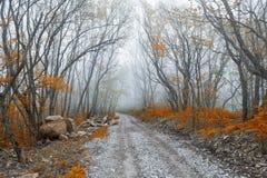 Bella foresta di autunno Immagine Stock