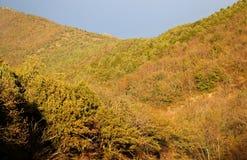 Bella foresta di autunno Fotografia Stock Libera da Diritti