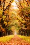 Vicolo di autunno fotografie stock