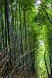 Bella foresta di bambù luminosa con i tronchi alti fotografie stock