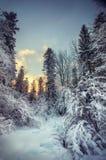 Bella foresta di inverno Fotografie Stock
