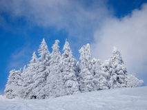 Bella foresta di inverno Fotografia Stock