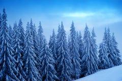 Bella foresta di inverno Fotografie Stock Libere da Diritti
