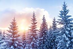 Bella foresta di inverno Fotografia Stock Libera da Diritti