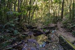 Bella foresta e un piccolo fiume fotografia stock libera da diritti