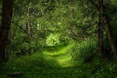Bella foresta magica Fotografie Stock