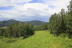 Bella foresta nelle montagne di Altai Immagini Stock Libere da Diritti