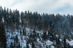 Bella foresta nevosa dell'abete rosso della montagna con gli alberi glassati Immagine Stock