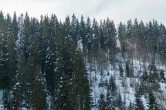 Bella foresta nevosa dell'abete rosso della montagna con gli alberi glassati Immagini Stock Libere da Diritti
