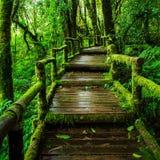 Bella foresta pluviale al sentiero didattico del Ka del ANG fotografia stock libera da diritti