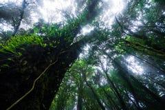 Bella foresta pluviale al sentiero didattico del Ka del ANG nel parco di nazione del inthanon di doi, Tailandia fotografie stock